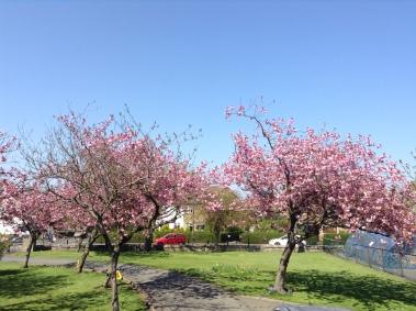 Longstone in Spring